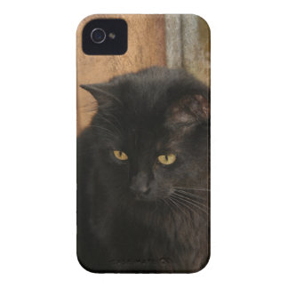 Black Cat Amber Eyes Earth Tones Textured Back Case-Mate iPhone 4 Cases
