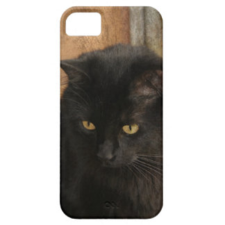 Black Cat, Amber Eyes, Earth Tones Textured Back iPhone SE/5/5s Case