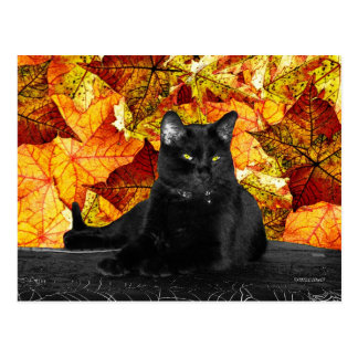Black Cat and Fall Leaves Postcard