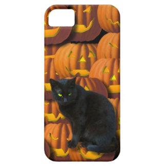 Black cat and pumpkins iPhone SE/5/5s case