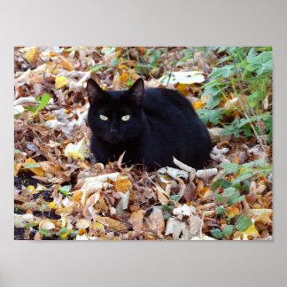Black Cat  Autumn Photo Value Poster Paper (Matte)