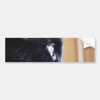 Black Cat Car Bumper Sticker