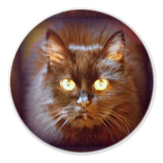 black cat ceramic knob