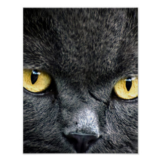 Black Cat Eyes Poster
