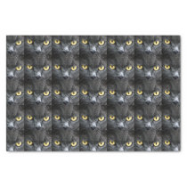 Black Cat Eyes Tissue Paper