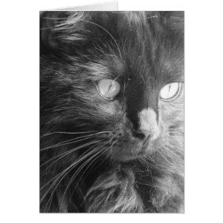 Black Cat Face, Black & White, blank notes