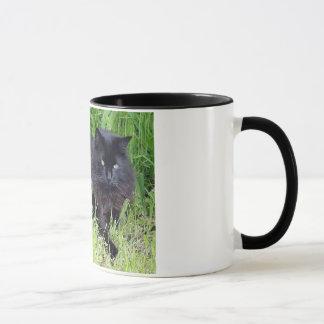 Black cat fluffy long hair feline regal proud mug