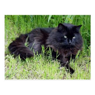 Black cat fluffy long hair feline regal proud postcard