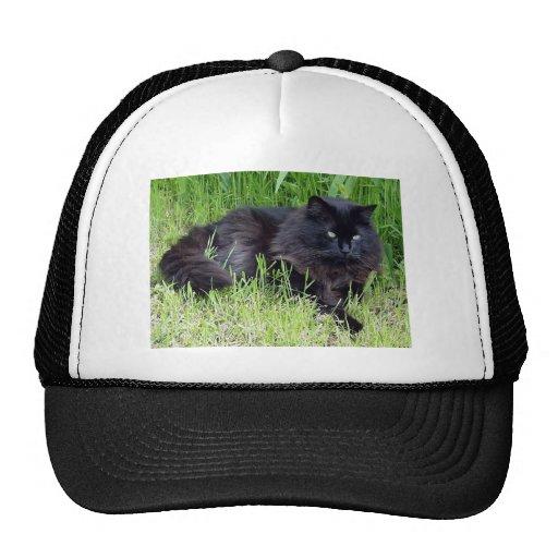 Black cat fluffy long hair feline regal proud trucker hat