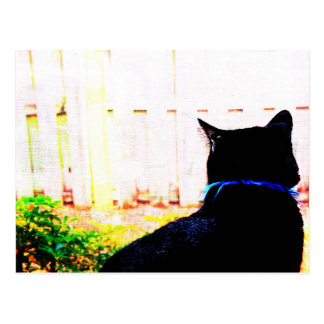Black Cat From Back Looking Out Window Postcard