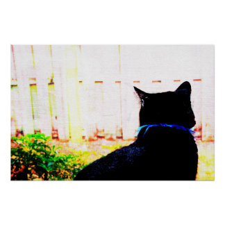 Black Cat From Back Looking Out Window Print