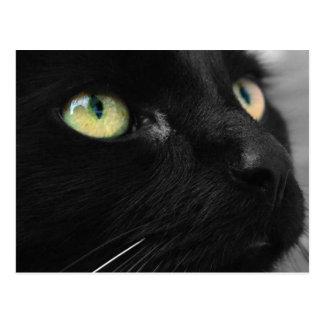 Black Cat Green Eyes Postcard
