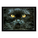 Black Cat Halloween or Note Card