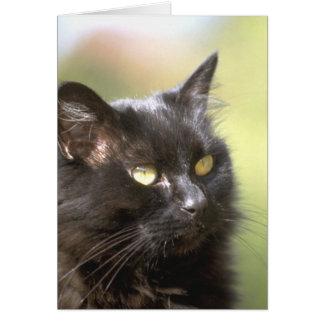 Black Cat Head Study Card