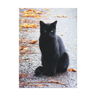 Black Cat in Fall Canvas