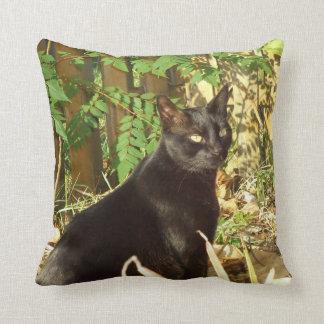 Black Cat in Morning Sun American MoJo Pillows