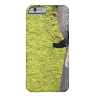 Black Cat in Rice Paddy Barely There iPhone 6 Case