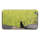 Black Cat in Rice Paddy iPod Touch Case
