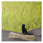 Black Cat in Rice Paddy Large Square Tile