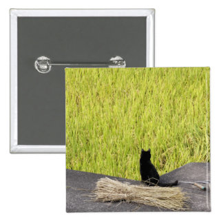 Black Cat in Rice Paddy Pinback Button