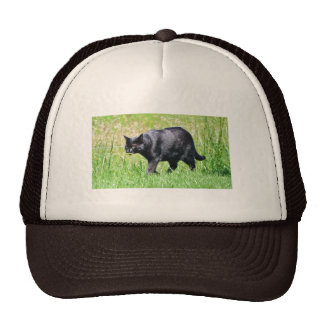 Black Cat in the Grass - Hat