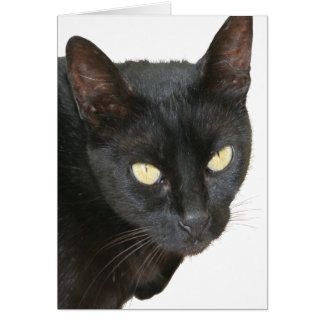 Black Cat Isolated Card