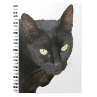 Black Cat Isolated Spiral Notebooks