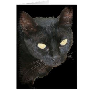 Black Cat Isolated on Black Background Card