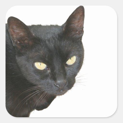 Black Cat Isolated Sticker