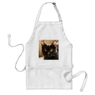 Black cat looking at camera eyes close up adult apron