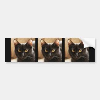 Black cat looking at camera eyes close up bumper sticker