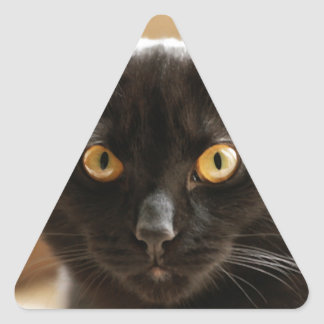 Black cat looking at camera eyes close up triangle sticker