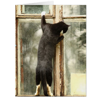 Black Cat Looking in Window Card