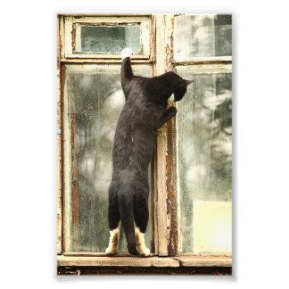 Black Cat Looking in Window Photo Print