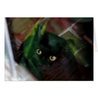 Black Cat Looking Through the Glass Card