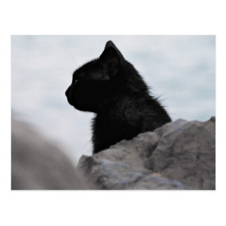 Black cat looks away postcard
