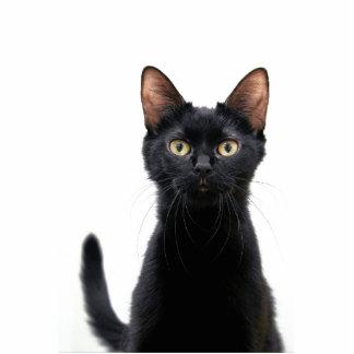 Black Cat Magnet Photo Cutout
