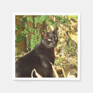 Black Cat Morning Sun Paper Napkins