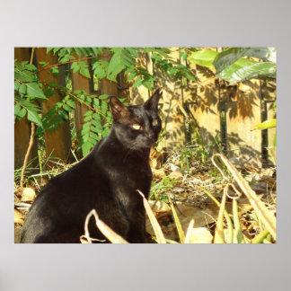 Black Cat - Morning Sun Poster