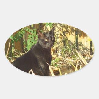 Black Cat, Morning Sun Sticker
