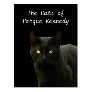 Black Cat of Parque Kennedy Postcard