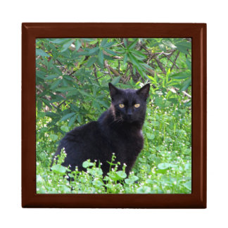 Black Cat on a Spring Day Jewelry Box