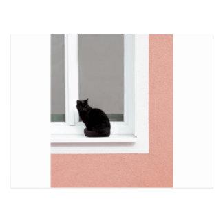 Black Cat on Coral Postcard