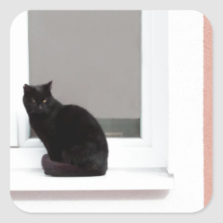 Black Cat on Coral Square Sticker