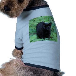 Black Cat on Lime Green plants Pet Shirt