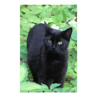 Black Cat on Lime Green plants Stationery