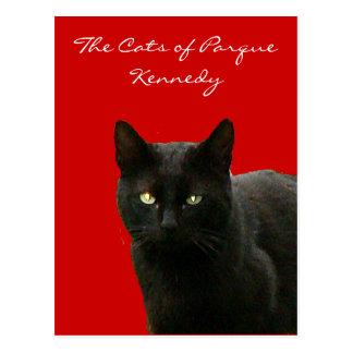 Black Cat on Red Postcard