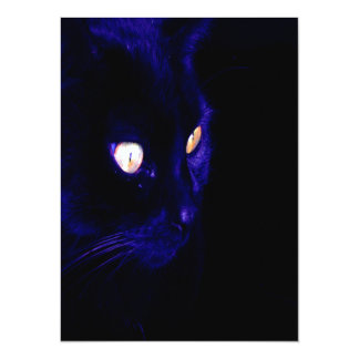 Black Cat Photograph, Halloween Eyes Card