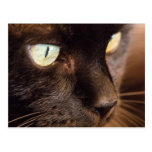 Black Cat Post Card