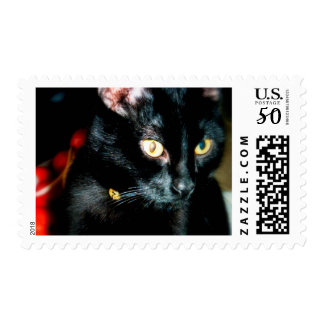 Black Cat Postage Stamp